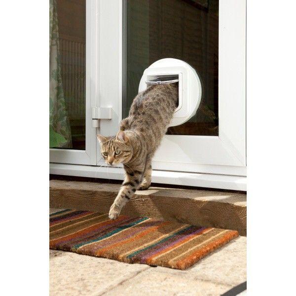 kattenluik in glas kattenluik in dubbel glas